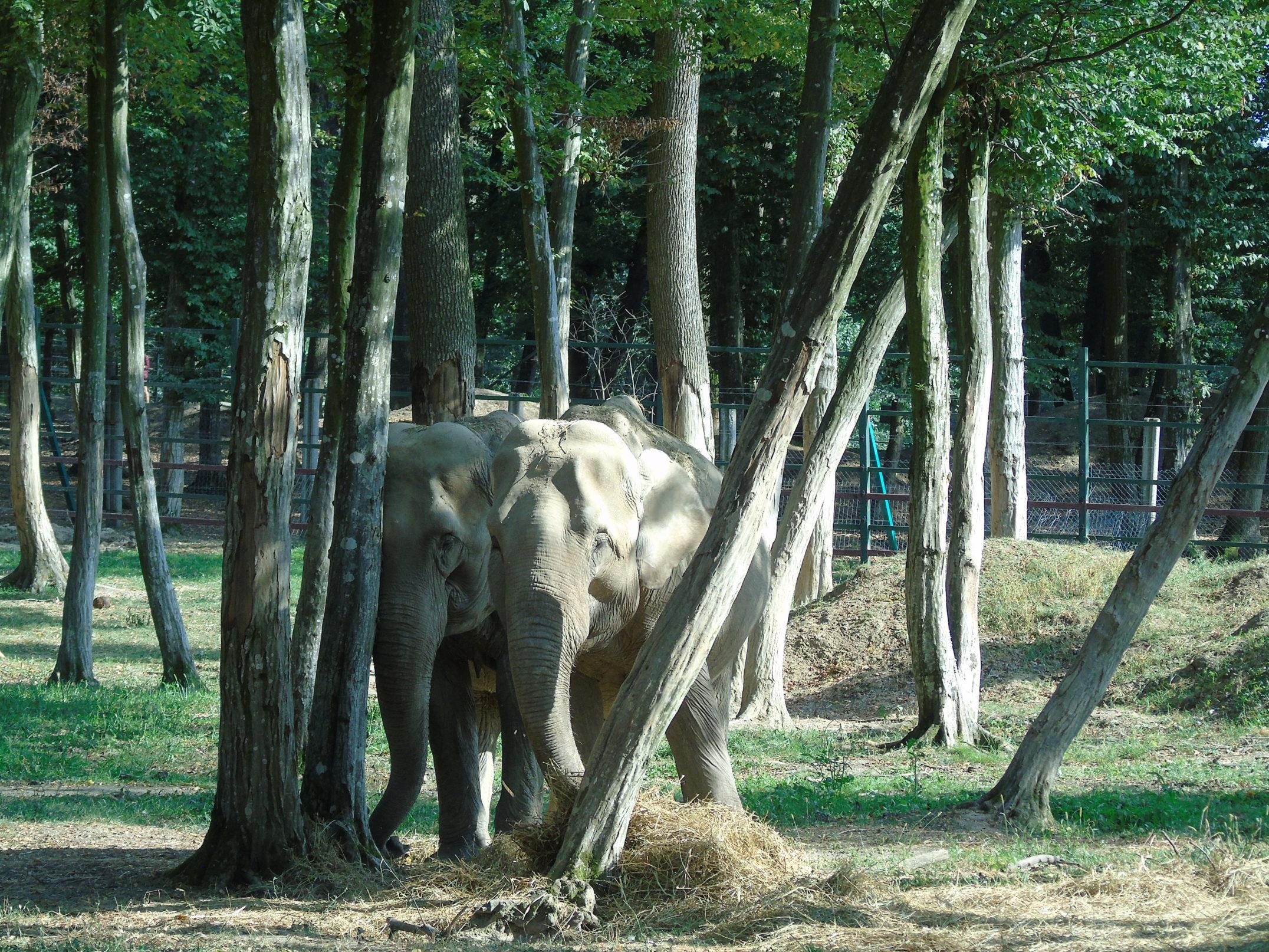 Prietenul meu, elefantul