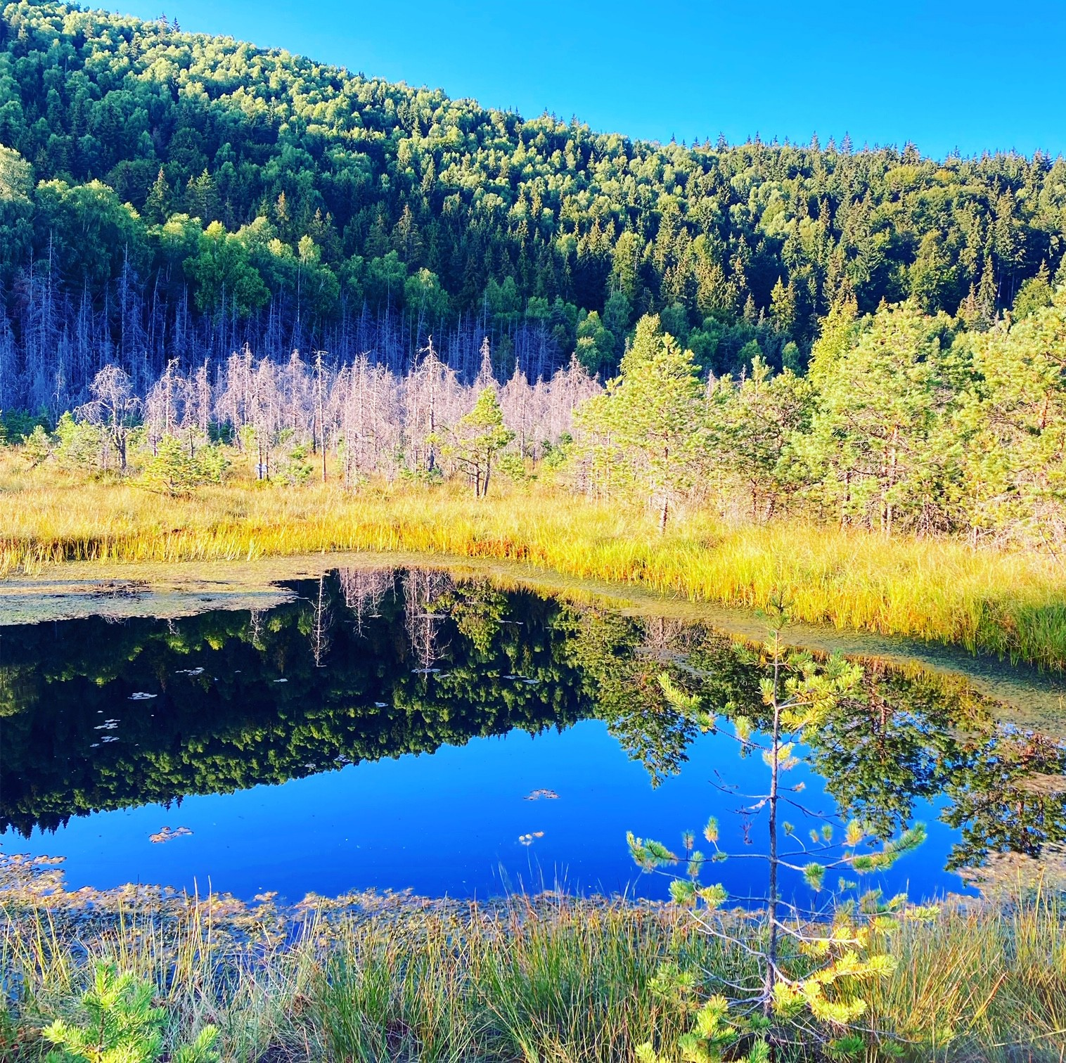 Înaintea urșilor prin Tinovul Mohoș